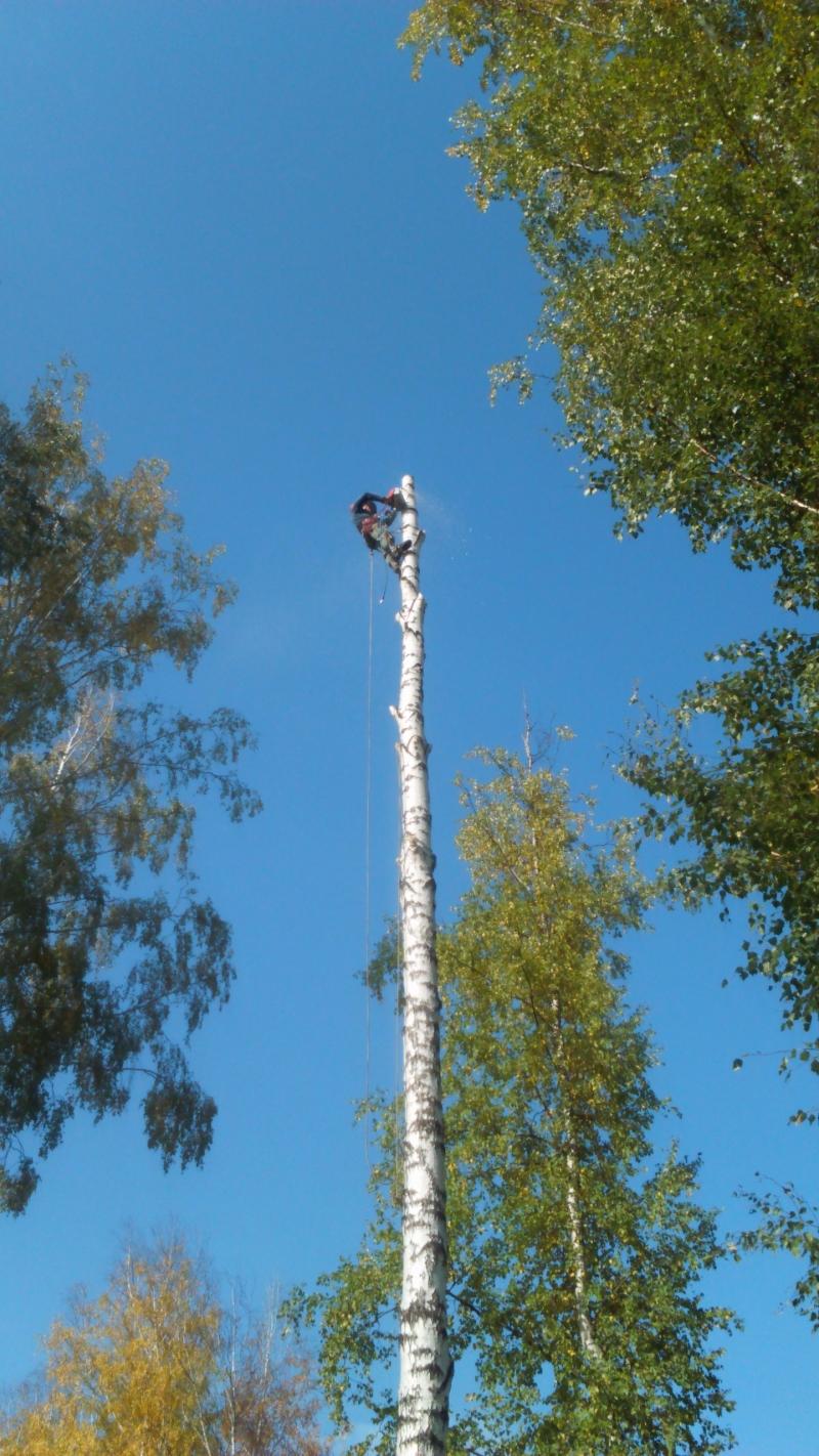 Спиливание деревьев, спил деревьев, альпинисты, измельчение веток