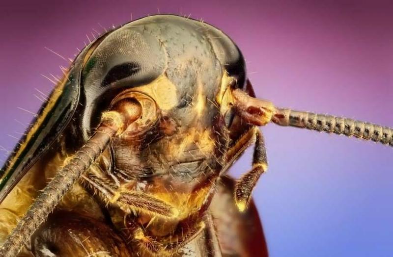Дезинсекция Вывовим клопов, тараканов.Гарантия