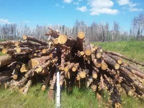Куплю кругляк леса на дрова