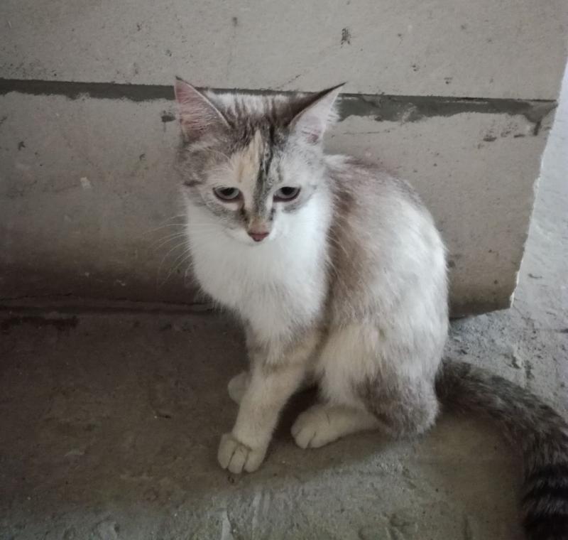 Очаровательной кошечке срочно нужен дом!