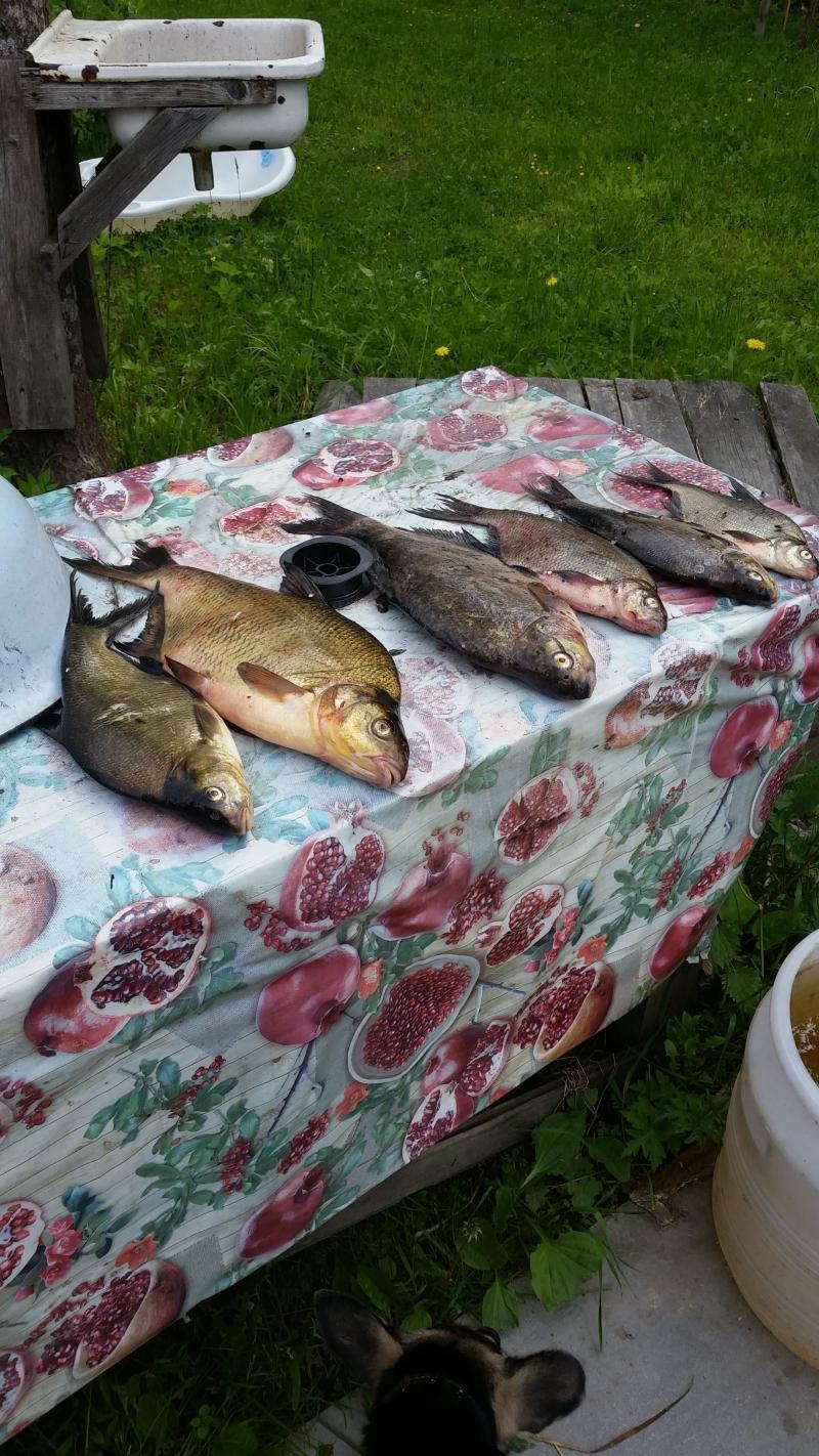 отдых и рыбалка на вуоксе