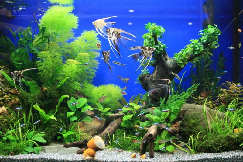 Обслуживание и оформление аквариумов