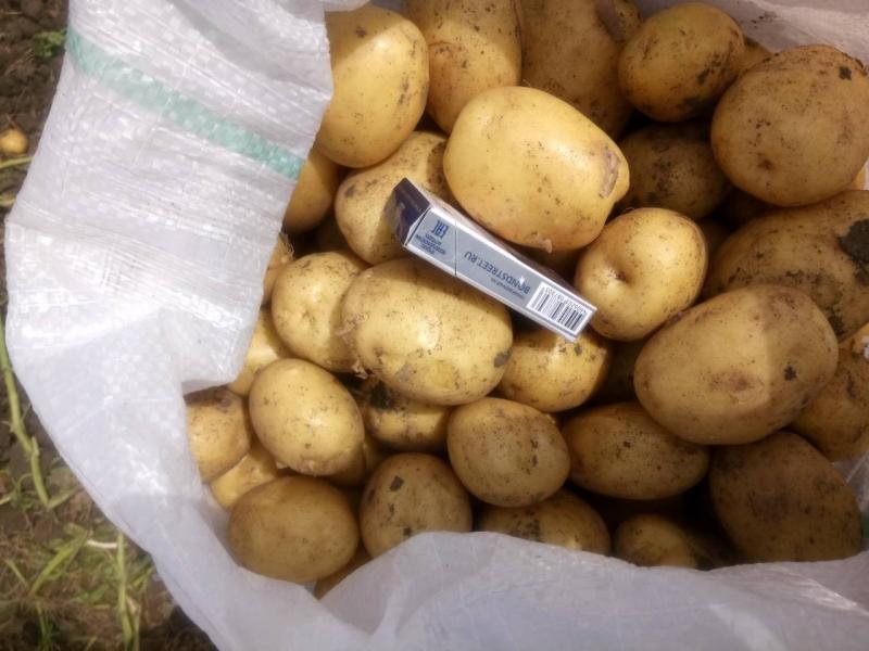 Картофель продовольственный оптом урожай 2018