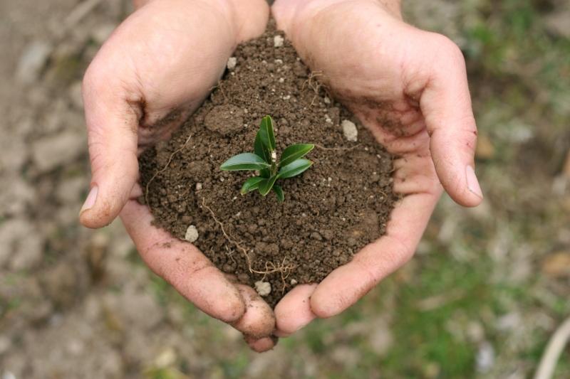 Оформление Земель в собственность