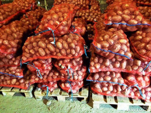 Картофель сорт гала, розара оптом со склада