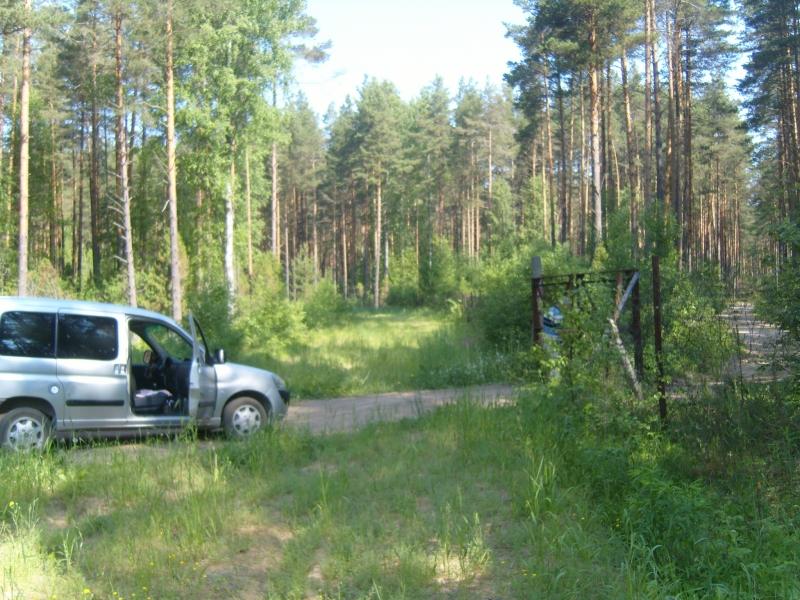 Дача в сосновом лесу