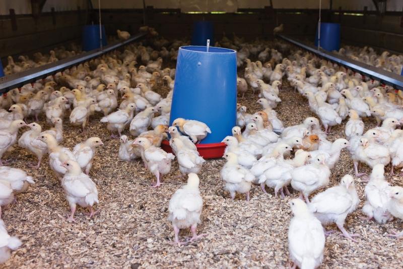 цеолит для животноводства