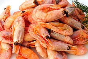 Оптовая торговля морепродуктами