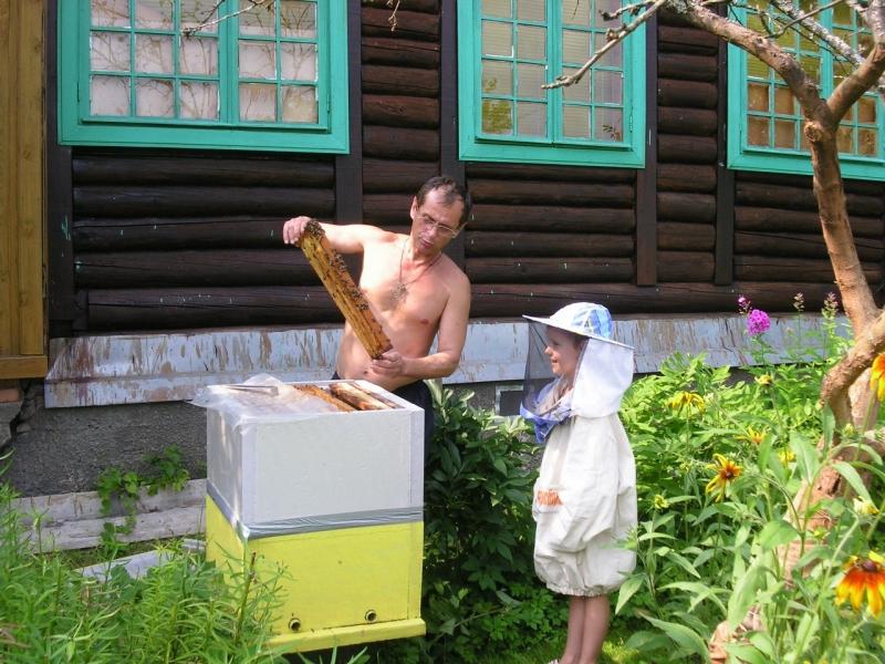 зимовалые семьи пчел.Пчелопакеты