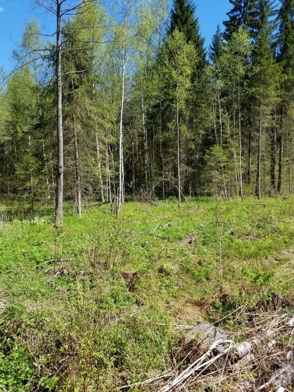 Продается ООО с арендой лесного участ