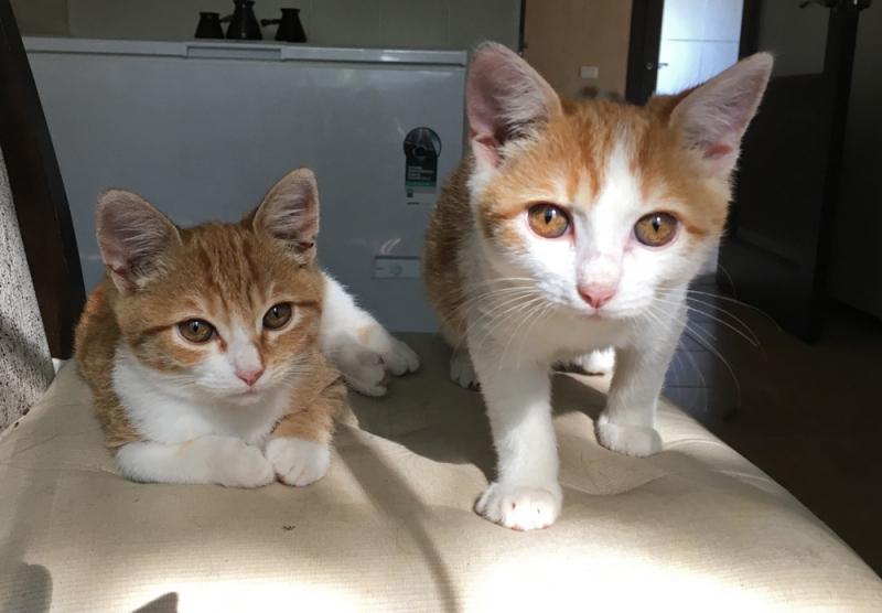 КОМУ РЫЖЕЕ СЧАСТЬЕ!!!!!!!!!   Котята ищут дом !!!