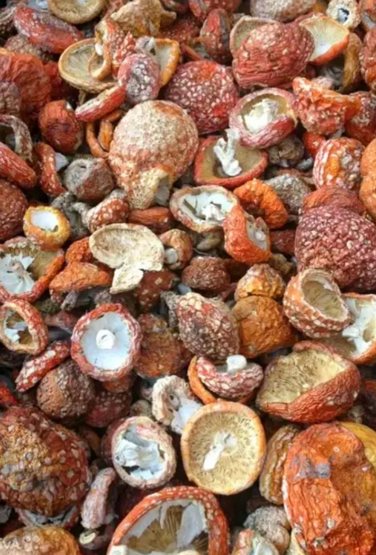 Купить Мухоморы сушёные