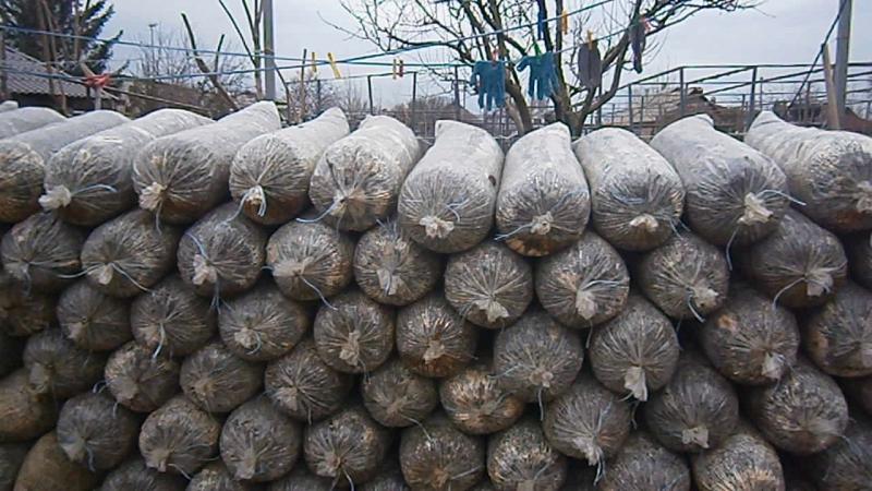 Отработанные грибные блоки