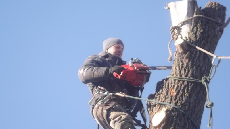 Спил деревьев Пенза и область