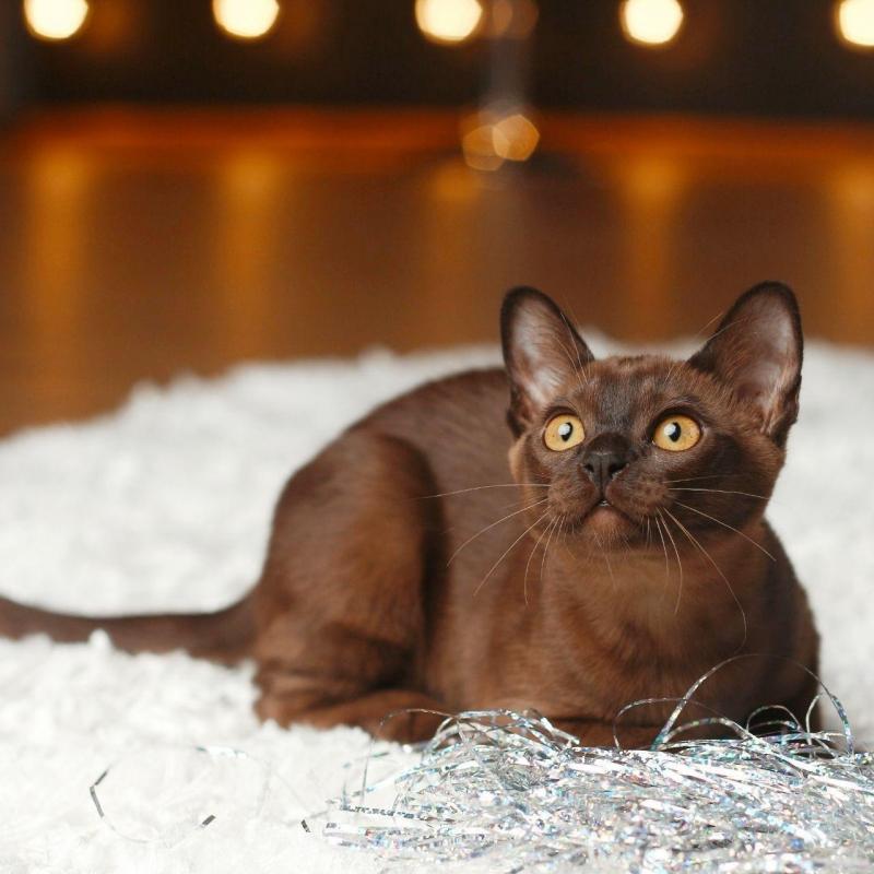 Норковые котята