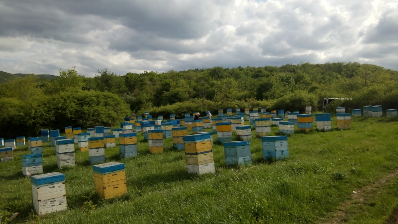 Мед опт и розница от производителей