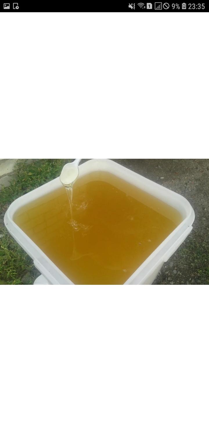 Продам мёд Липа (чистая)