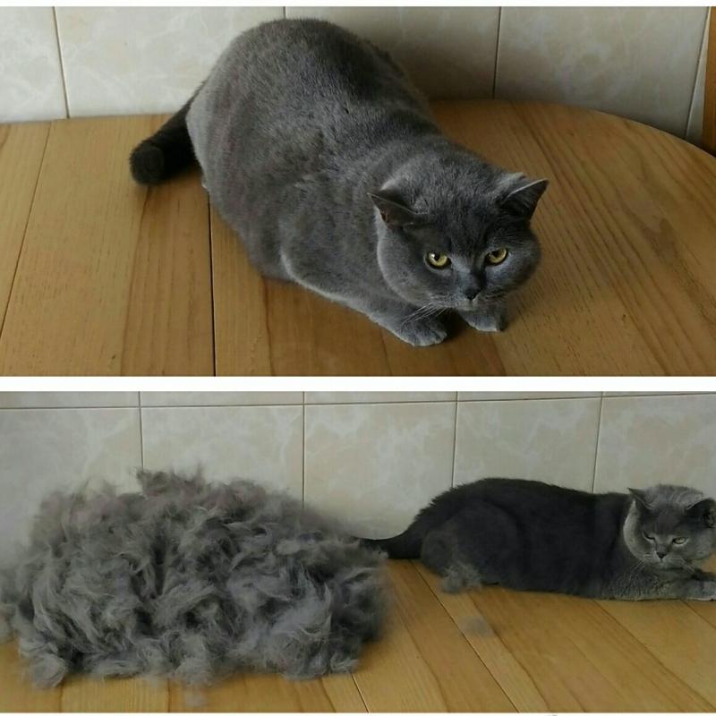 Выездная Экспресс линька  Коту, Кошке в Москве.  ** Вычёсывание  котов и кошек