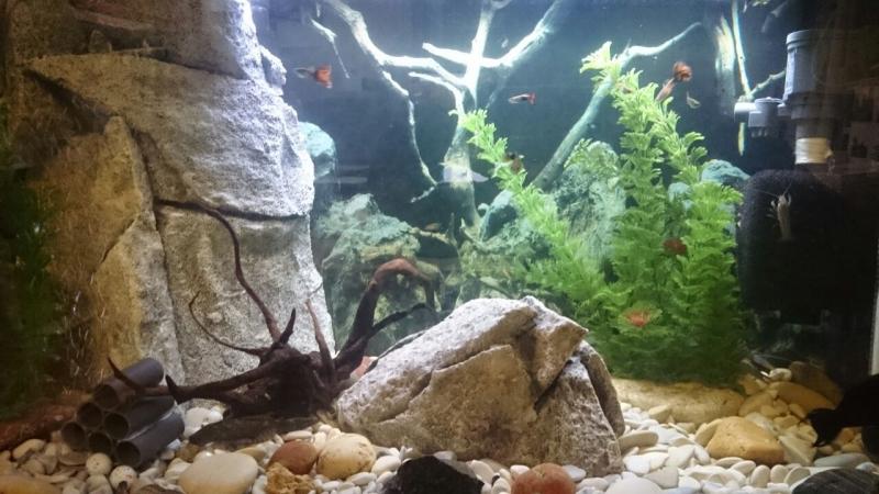 Обслуживание Вашего аквариума