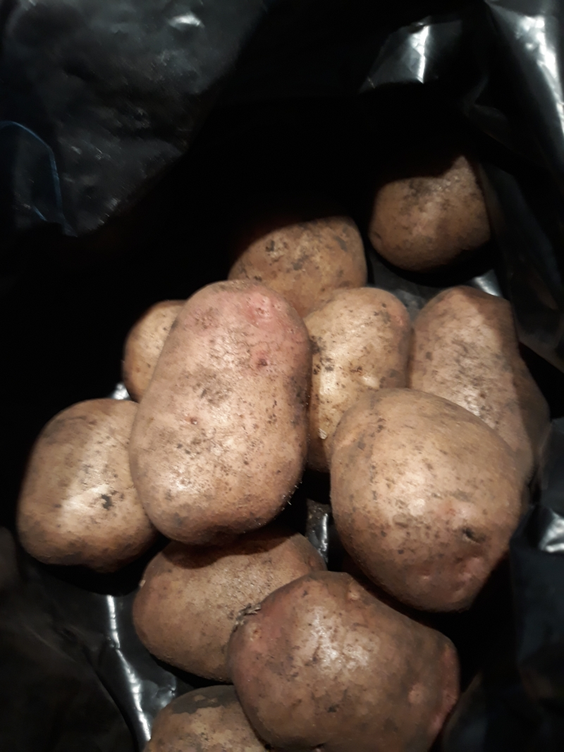 Картофель продам