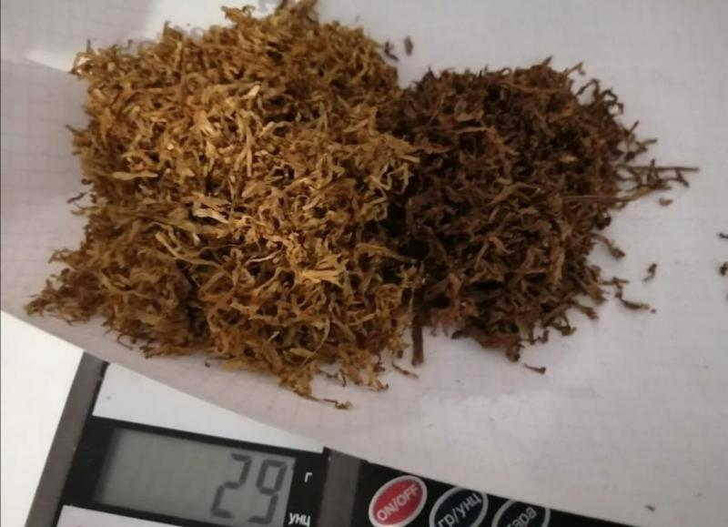 Семена табак по 250 грамм. (Gold, Red, America и другие)