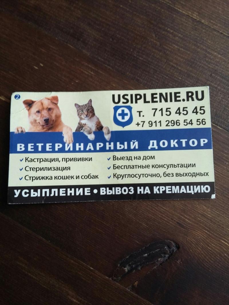 Ветеринарная помощь Выездвет