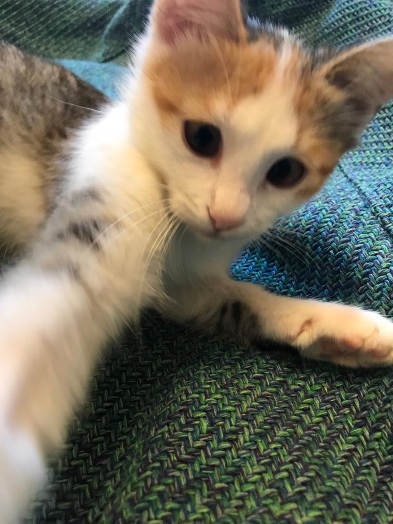 Шустрый котенок в хорошие руки