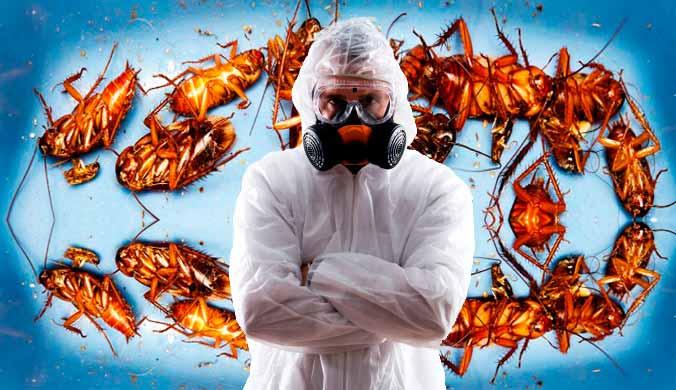 Дезинсекция уничтожение избавление от насекомых тараканов клопов блох