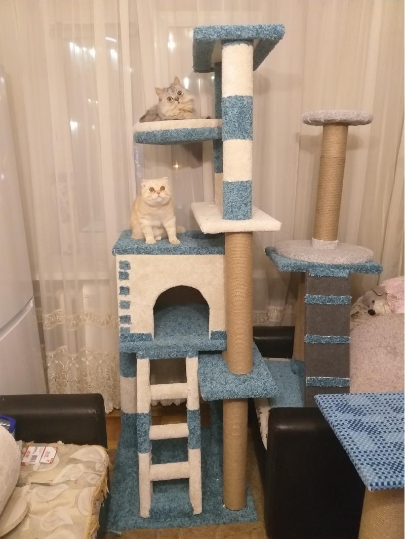 Когтеточки и домики для кошек Казань