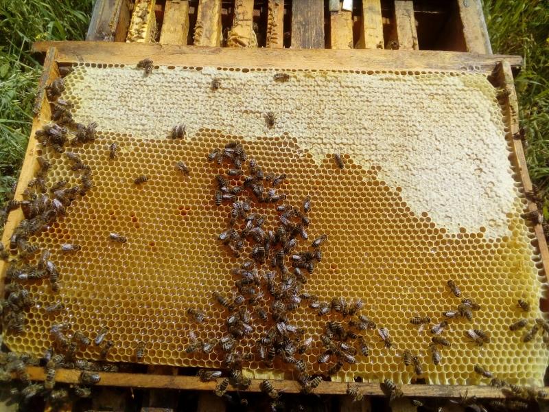 Мёд 500 руб литр