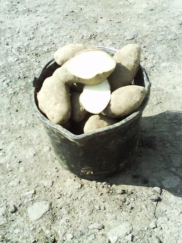 Картофель фермерский