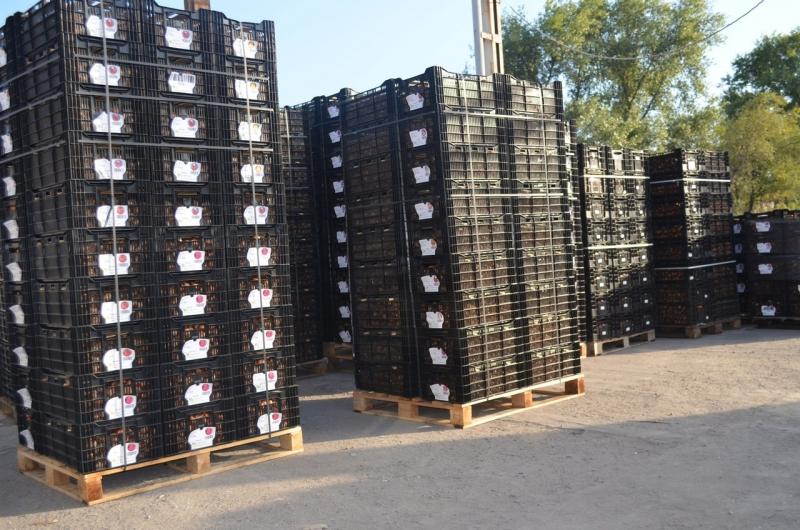 Ящики пластиковые Голландия
