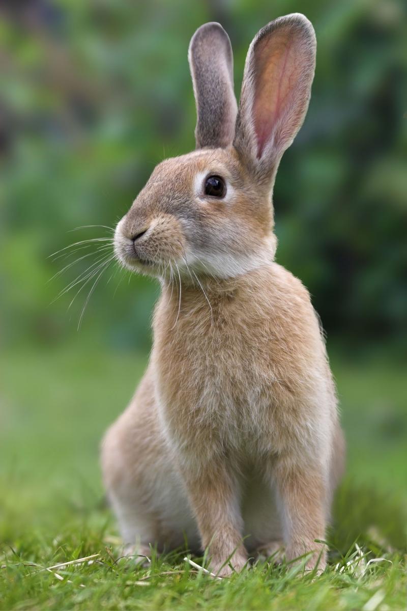 Куплю кроликов